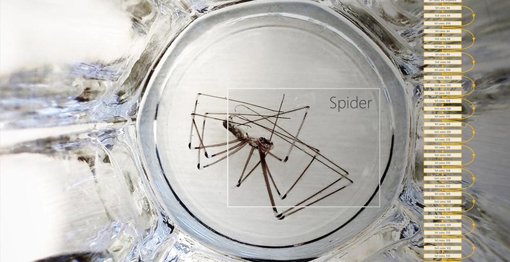 resnet spider[7862].png