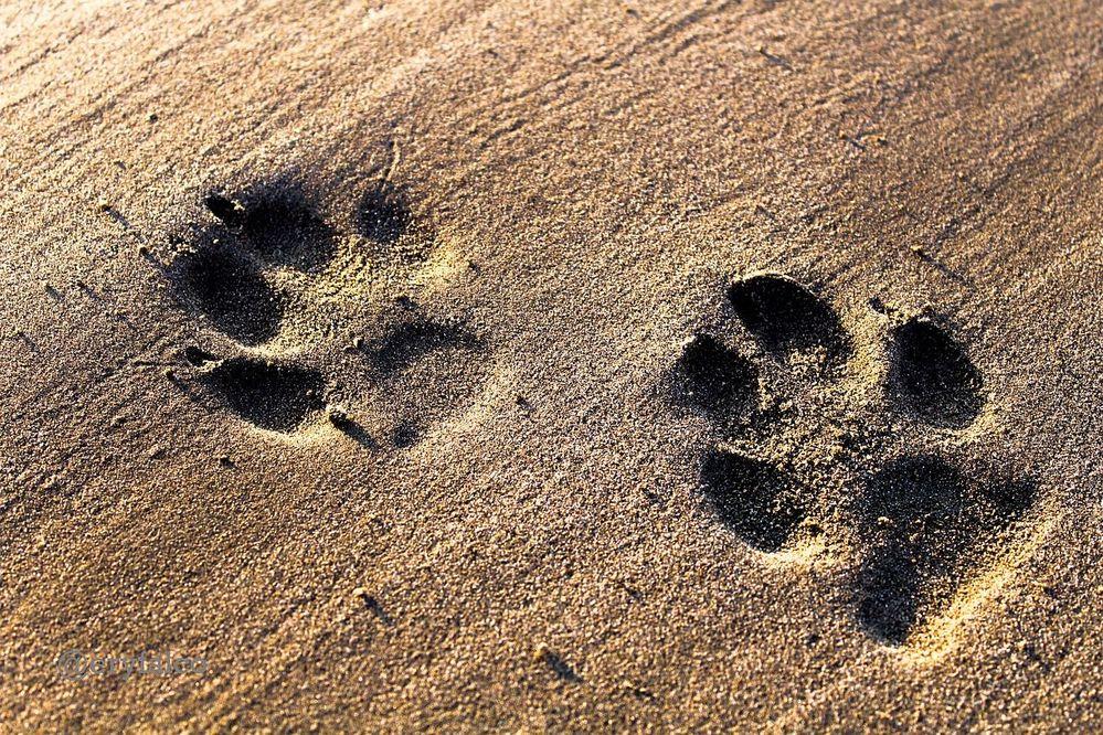 Beach-Footprints-Sand-Dogs-Footprint-Holiday-4417556.jpg
