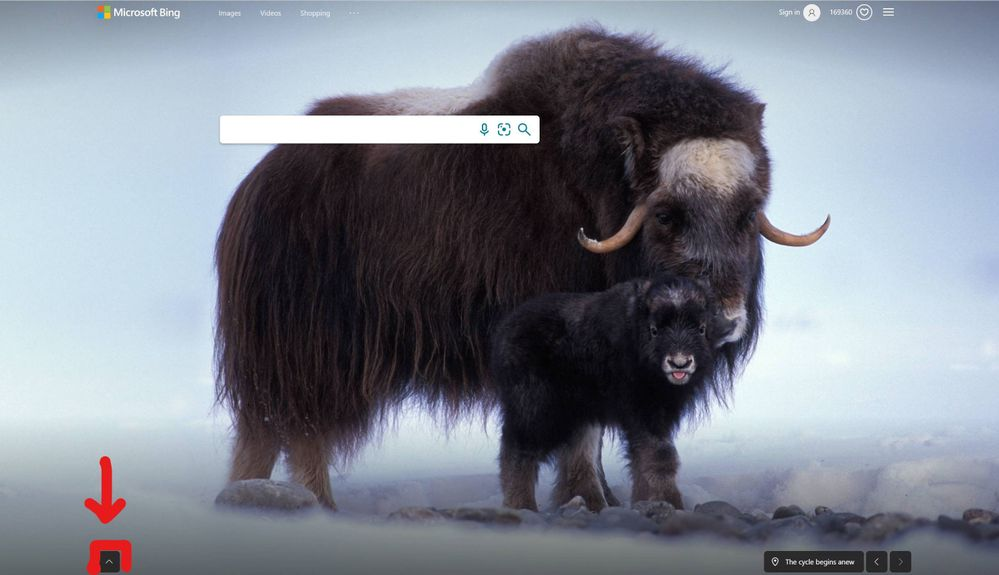 Bing Home Page Pop up Feature Highlighted.jpg