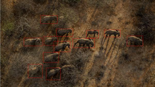 ElephantsViewDown.png