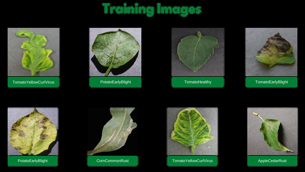 training-images