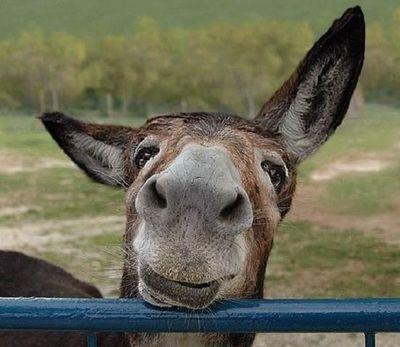 http://pixdaus.com/donkey-face/items/view/558299
